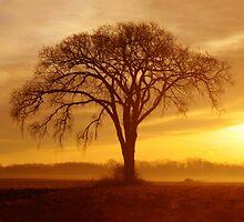 Morning Glow by Jeannette Garneau