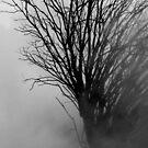 Into The Gloom by Varinia   - Globalphotos
