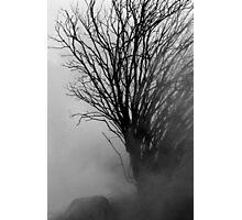 Into The Gloom Photographic Print