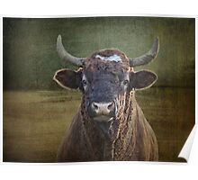 Portrait of a Bull Poster