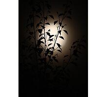 Misty Midnight Moon Photographic Print