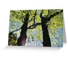 Springtime Morning With Twin Forest Trees  Greeting Card