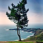 SanFrancisco-Marin Highlands by Ron Trinca