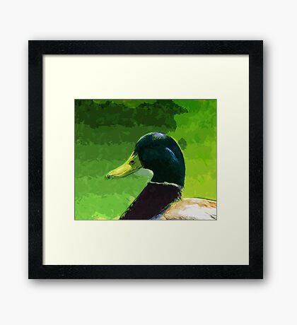 Male Mallard Duck Abstract Impressionism Framed Print