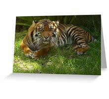 Sumatran Tigress Greeting Card