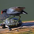 Get Off Her Back! by George Lenz