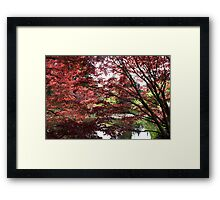 Japanese Maple Trees Framed Print