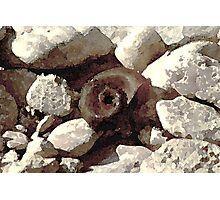 Snails and rocks Photographic Print
