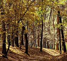 Warm autumn day in the woods by Serhii Simonov