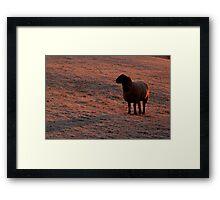 Sheep at sunrise  Framed Print
