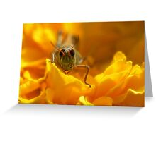 Petal Hopper Greeting Card