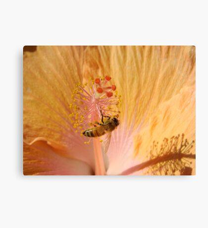 Orange Bee Stamen Hibicus Shadow Canvas Print