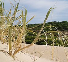 Sand dune by Joneswithjoy