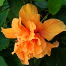 Orange Glow by Shelley Neff