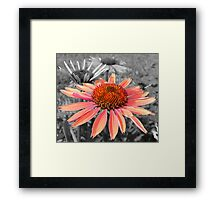 Star Pupil Framed Print