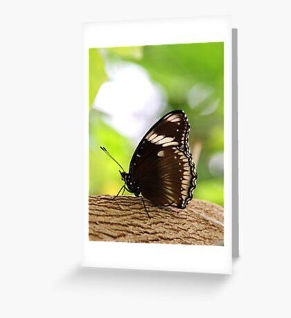 Zen Butterfly  Greeting Card