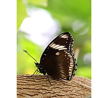 Zen Butterfly  Photographic Print