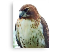 The Majestic Red Tail.. Metal Print