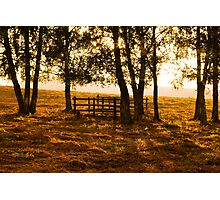 Autumn Afternoon Photographic Print