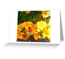 Britenezz o'  lily blossoms of yellow and orange - Golden Corral series Greeting Card