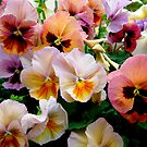 Pansies by stopthat