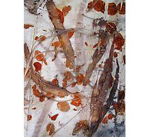 Australian eucalyptus  - Gondwana Colour  Photographic Print