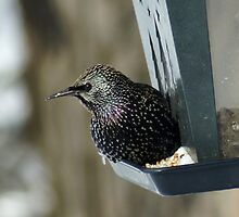 Is it Spring Yet? by Holly Schimpf