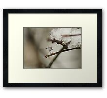 The Frozen Claw. Framed Print