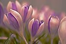 Purple Rain. by Todd Rollins
