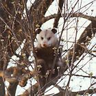 Up a Tree by Sheila Simpson