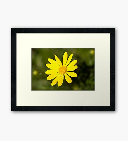 Bright yellow daisy flower photography Framed Print
