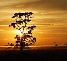 Sunrise gumtree by SDJ1