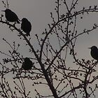 Birds of a Feather....Colorado Springs  by dfrahm