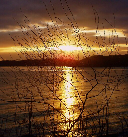 sunset through the undergrowth........ by Lucan  Netley (LDN Photoart)
