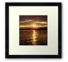 sunset through the undergrowth........ Framed Print