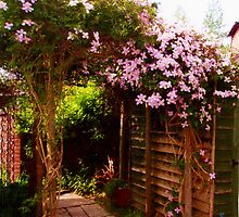 Clematis Walk by David Smith