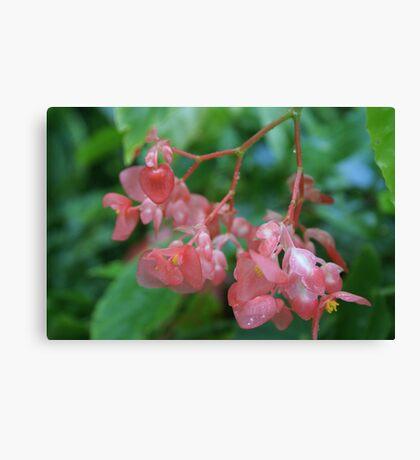 Waxy Pink Canvas Print