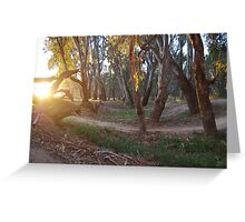 Trails at dawn Greeting Card