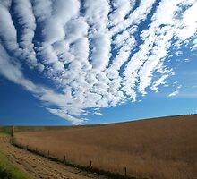 Barrabool Hills by Bevellee