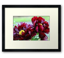 Living Large Framed Print