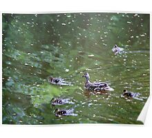 Mallards on the Nidd Poster