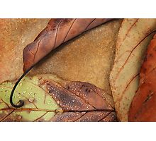 Fallen Triangle, Fine Art Photography, Abstract  Photographic Print