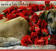 The Mattie Cancer Fund 1 by Samitha Hess