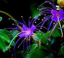 Neon flowers by Tanya Wallace