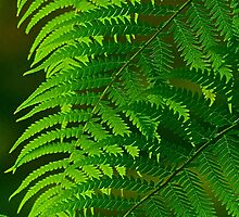Fronds. by Bette Devine