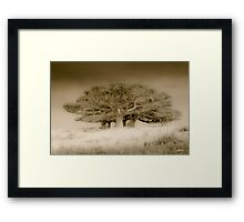 The old lonely trees Framed Print