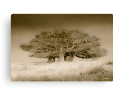 The old lonely trees Canvas Print