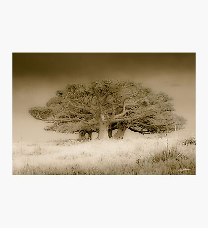 The old lonely trees Photographic Print