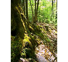 old mossy Photographic Print