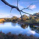Overlooking the lake at Oakbank by Elana Bailey